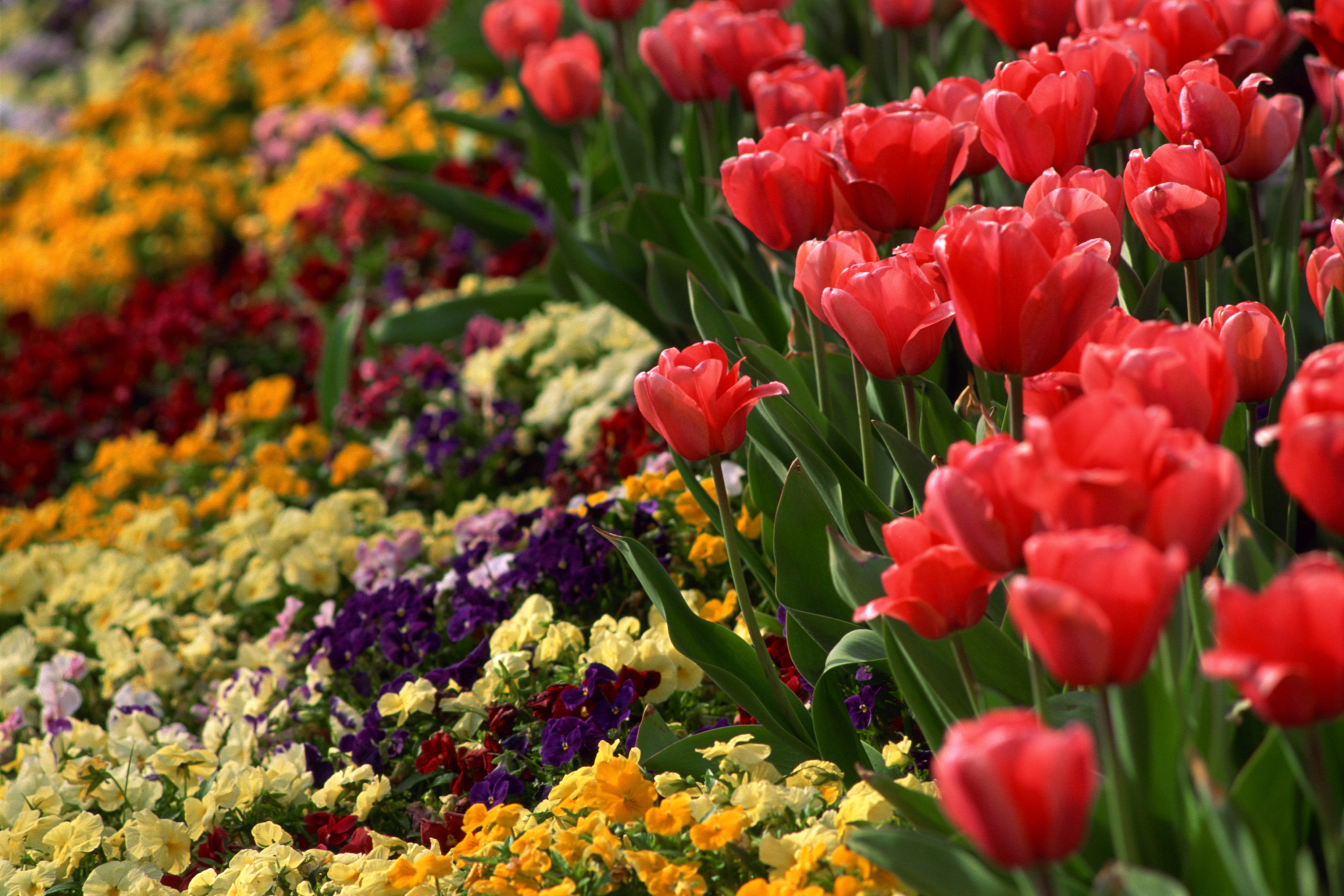 Stevinson imports the best springtime flowers for your garden - Flowers that bloom from spring to fall ...