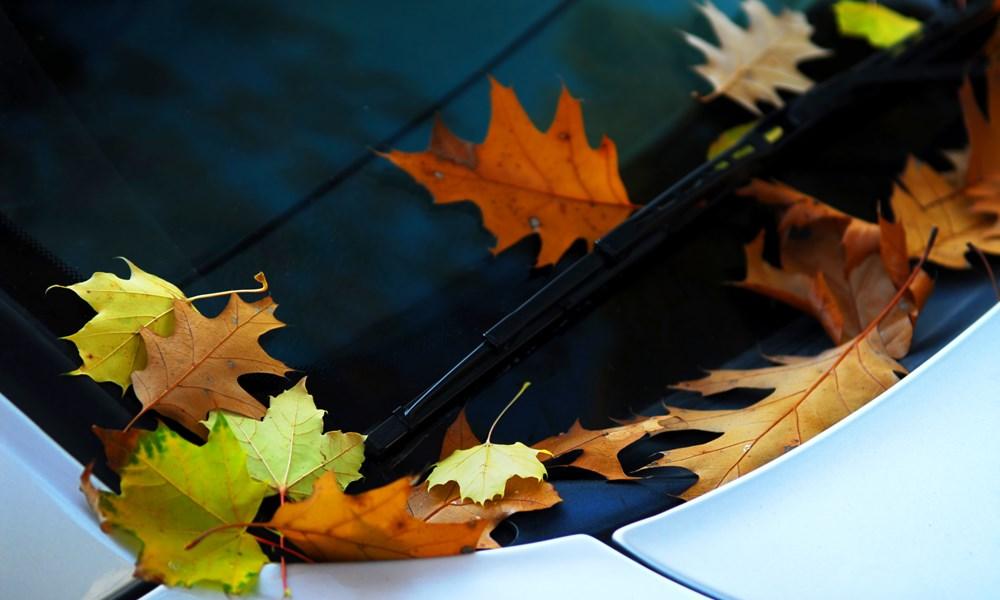 Hyundai Fall Special